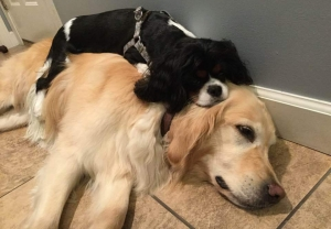 worn out dogs